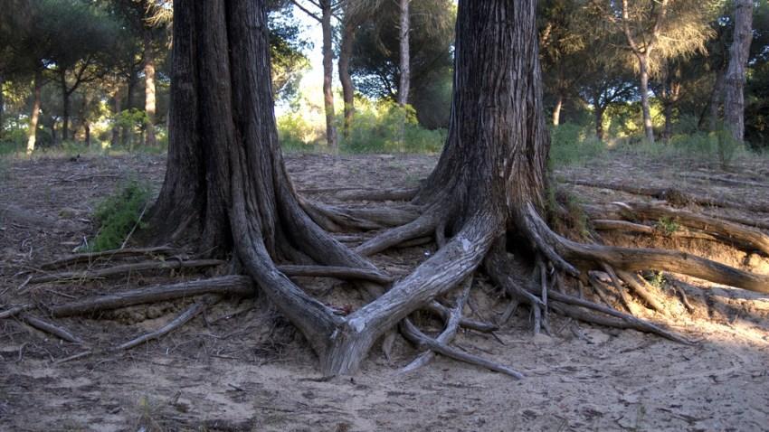 arboles-bosque
