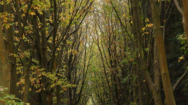 bosque-pensilvania