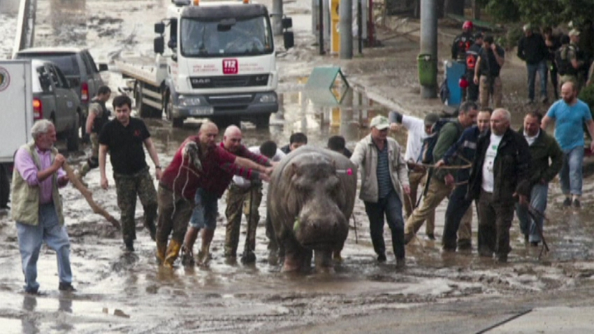 georgia-hipopotamo-inundaci