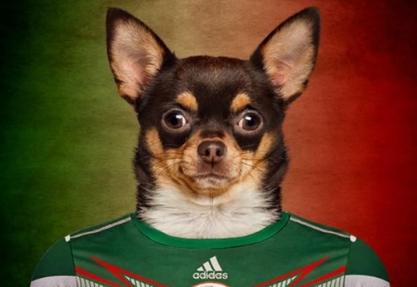 tlmd_perros_mundial11_mexico