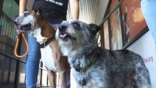 Bentley y Jase de San Antonio Pets Alive!