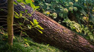 Fallen tree shown in the forest.
