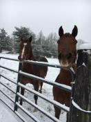 [UGCPHI-CJ-weather]Snow day with Penny and Minnie