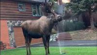 Un aspersor al lado de una casa fue el lugar que escogió y los vecinos aprovecharon para admirarlo.