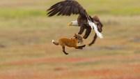 Mira las impresionantes fotos de esta épica batalla.