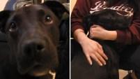 El impresionante caso del cachorro de siete meses se volvió viral en las redes sociales.
