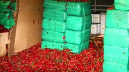 Decomisan toneladas de marihuana en chile jalapeños
