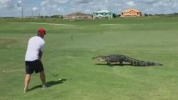 Viral: juega a pies de un caimán que pasea por campo de golf