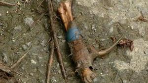 Macabro: hallan cientos de gallos y perros muertos en sacos tirados a un lago