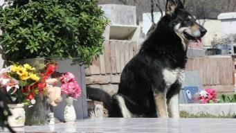 Muere perro que por una década veló la tumba de su amo