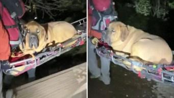 El momento en que rescatan a un perro de 190 libras