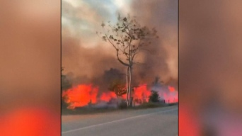 """Brasil: incendios arrasan con el """"pulmón del mundo"""""""