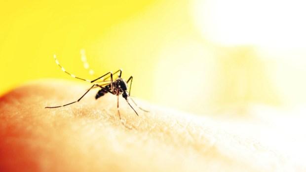 """Zika: """"María Sin Vergüenza"""" contra la sed de sangre del mosquito"""