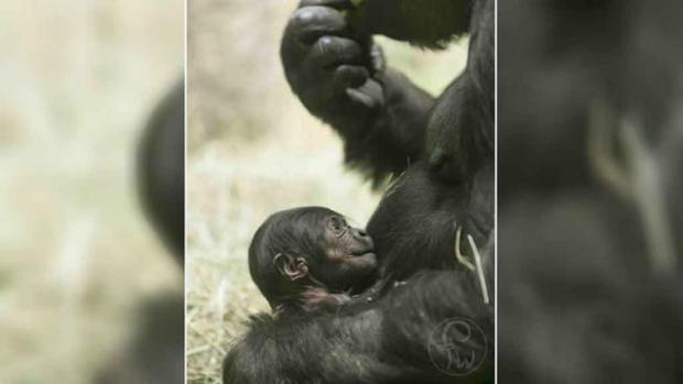 Los animales bebés