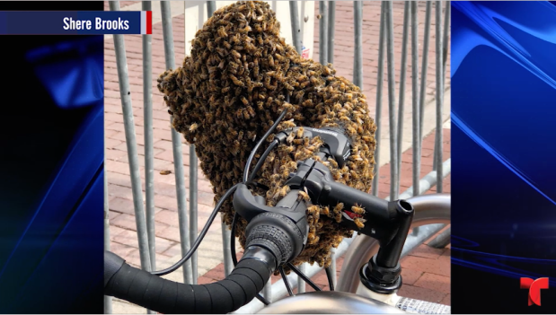 """[TLMD - LV] Abejas """"atacan"""": primero invadieron un cuarto y ahora...una bicicleta"""