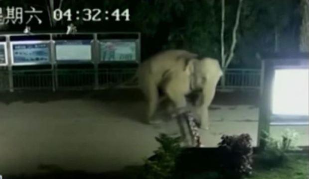 [TLMD - NATL] Elefante burla a agentes fronterizos y cruza con elegancia