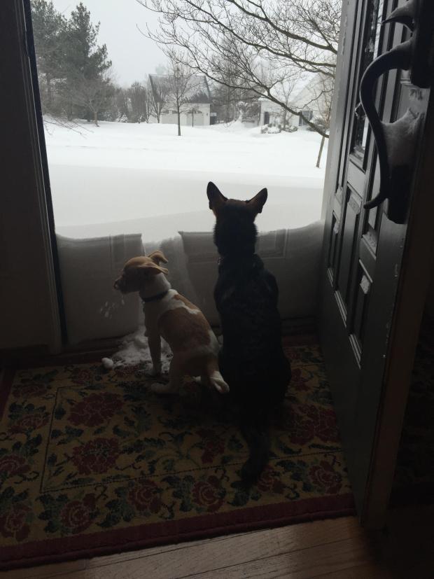 TUS FOTOS de la tormenta invernal