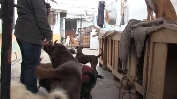 [TLMD - El Paso] Familia da hogar a 120 mascotas dentro de su residencia