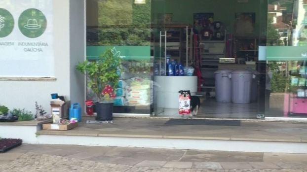 Perro va a la tienda por su propia comida