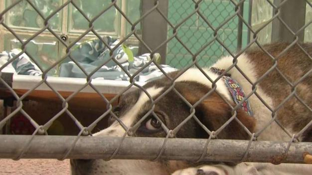Sonrisas y nuevo hogar para decenas de mascotas