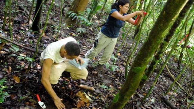 Catalogan mil 700 nuevas especies de plantas