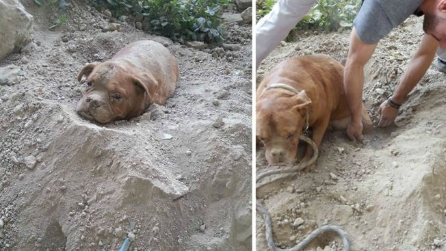 Indignación tras hallar perra enterrada viva