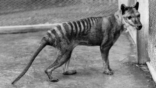 Investigan presunto avistamiento de especie extinta