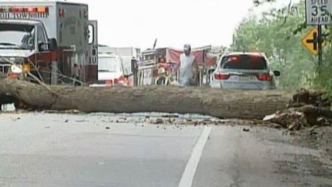 Árbol cae sobre carro y mata dos niños