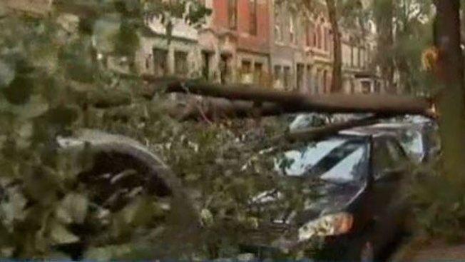Árbol daña carros en Rittenhouse Square