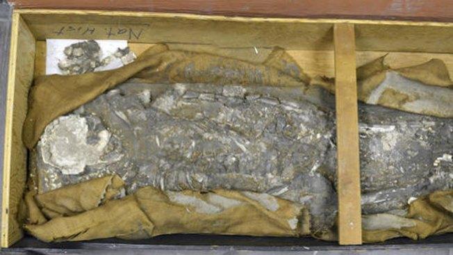Exhibirán esqueleto de 6,500 años