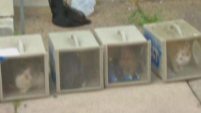 Gatos muertos en casa con excrementos