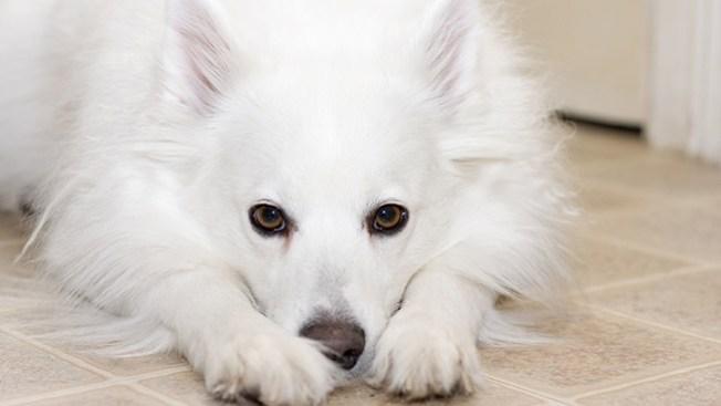 Acusan a mujer de cegar a perrito