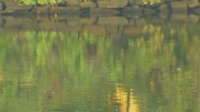 Hallan cuerpo de hombre en Monongahela River