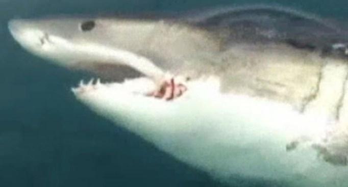 Adolescente asegura tiburón lo mordió